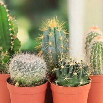 Las 20 plantas que ayudan para rodearte de energía positiva en tu hogar y el trabajo