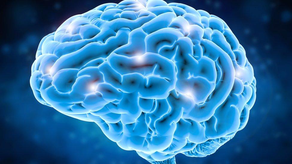 _95484468_brain