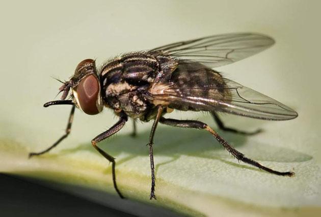 Formas caseras de eliminar las moscas de tu hogar el - Eliminar moscas en casa ...